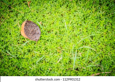 Green grassy texture in nature background. Fresh green lawn in the backyard for background. Green grassy background vignette or the naturally walls texture Ideal for use in the design fairly.