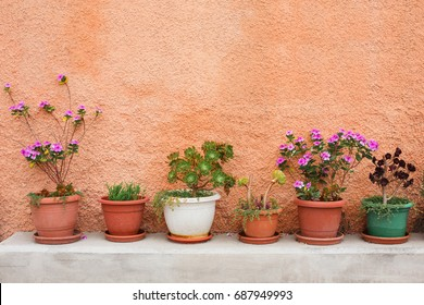 green growing plants and other flowers on orange wall with copy space