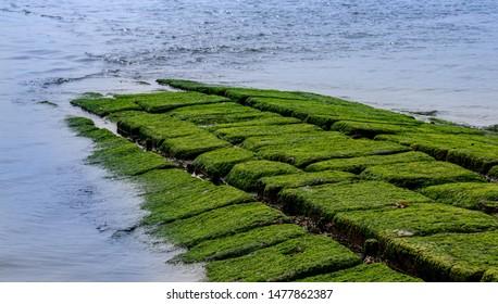 green groynes on island norderney, travel germany