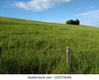 Green grss land sky grass