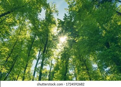 El bosque verde y sano es una parte importante de nuestro ecosistema. La forestación para un futuro mejor.