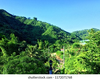 Green healthy trees of a tropical forest in the mountains of Cebu City Philippines.