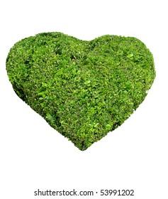 green heart bush plant grow