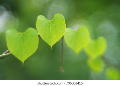 green heart leaf background with soft focus