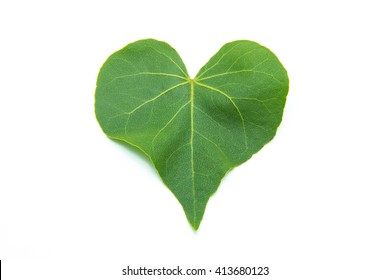 green heart leaf isolated on white background