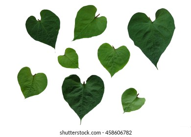green heart leaf and space background