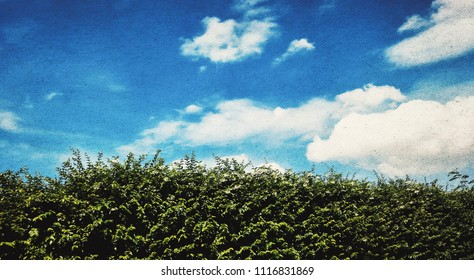green hedge fence with blue sky background in retro style effect