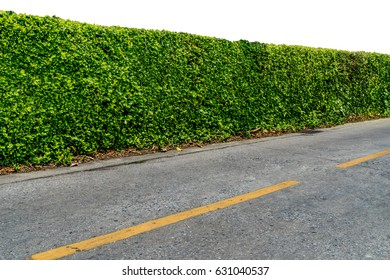 Green hedge fence with concrete sidewalk and  asphalt road isolate on white background