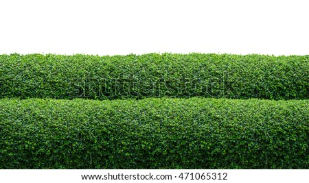 green hedge fence on white background stock photo edit now