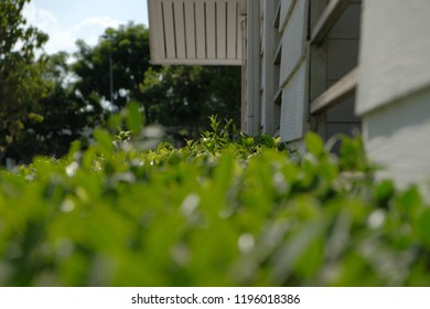Green hedge or leaves wall