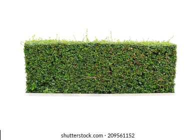 green hedge on isolated, add Clipping path