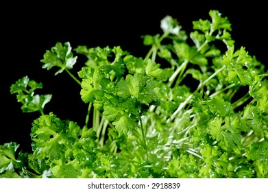 Green herb isolated on a black background.