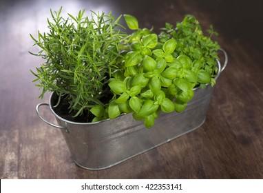 Green herbs in a pot home - Shutterstock ID 422353141