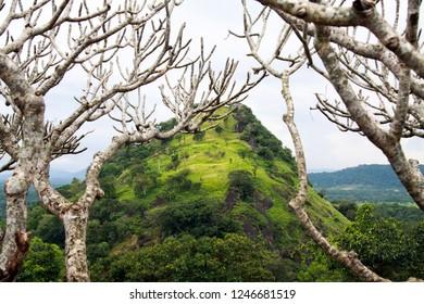 green hill framed by barren tree in Sri Lanka
