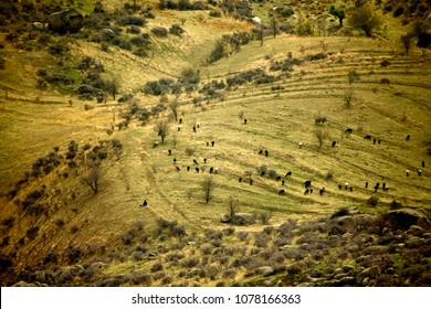 Green hill landscapes of Middle Asia (Uzbekistan)