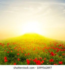 green hill with red poppy at the sunrise