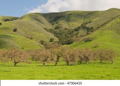 Green hills & barren trees along Pacheco Pass, Hollister, California