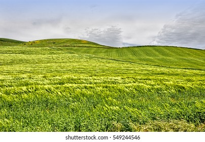 Green hills, blue sky. Andalusia. Spain.