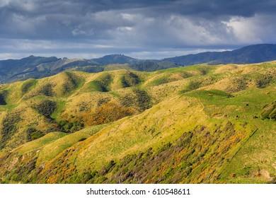 green hills landscape, location - Kapiti Island, North Island, New Zealand