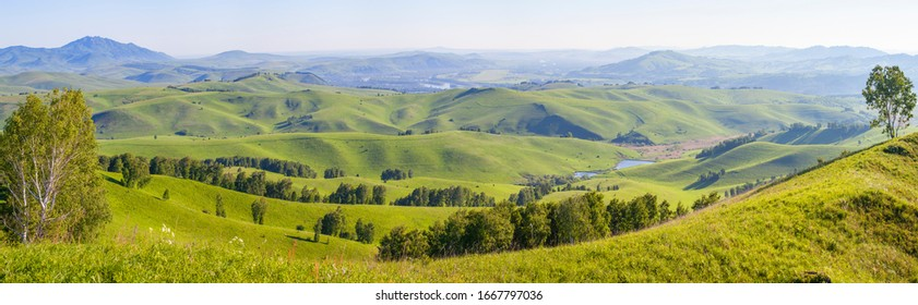 Green hills, meadows and trees. Sunny summer day, countryside. Panoramic view.