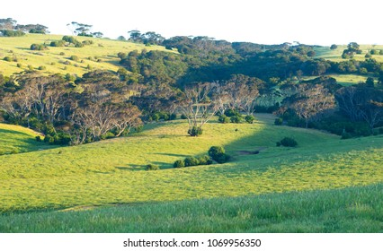 Green hills of Penneshaw, Kangaroo Island bathed in late afternoon sunlight in South Australia, Australia