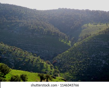 Green hills and valleys in the north of Jordan, on the way from Ajloun to the jordan valley, where you can see forests and lush green fields during summer.
