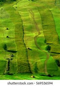 Green hillside hay making