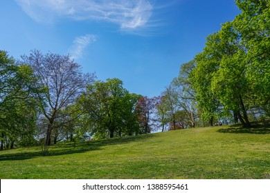 Green, hilly park with clear blue sky on a spring/summer day