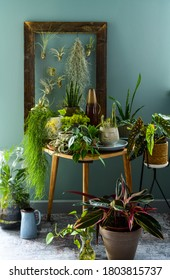 green home plants arranged on a table in a living room