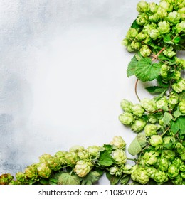 Green hop cones, gray background, top view