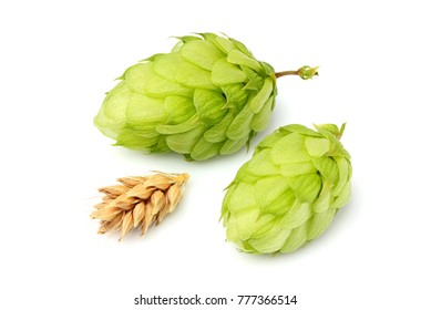 Green hops and ears of barley.Isolated closeup on white background.