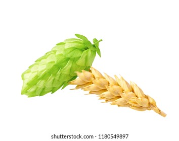 Green hops and ears of  wheat grain  to be used to brew the craft beer.