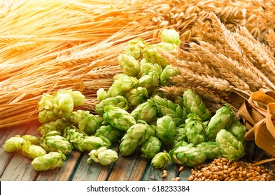 Green hops, malt, ears of barley and wheat grain, ingredients to make beer and bread, agricultural background,