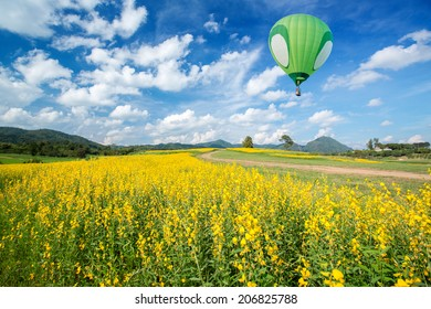 Green hot air balloon over yellow flower fields with blue sky background