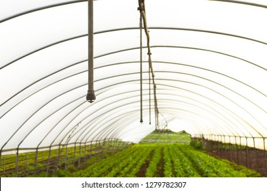 green house for edible vegetables
