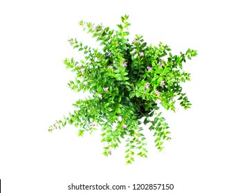 green house plant isolated on white background