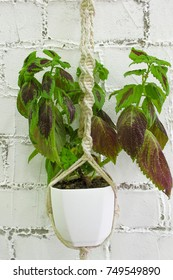 green house plant in macrame plant hanger