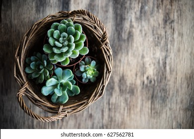 Green house plants potted, succulents in a basket