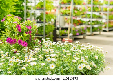 Green house shop with potted flowers at garden centre