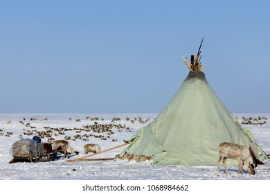 The Green House of tundra takers in the Arctic Circle