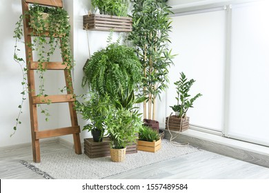 Green houseplants near white wall in room