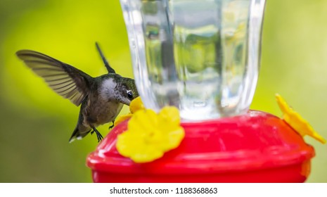 Green Hummingbird and feeder on a summer day Nature photography urban wildlife