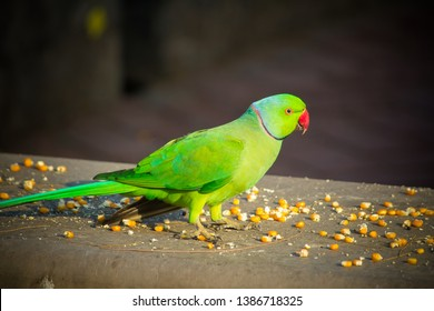 Parrot Pet Images Stock Photos Vectors Shutterstock