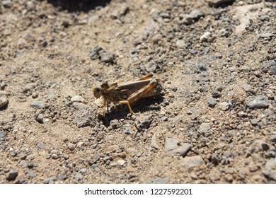 a green insect (locust/grasshopper)