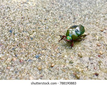 Green insect on sand
