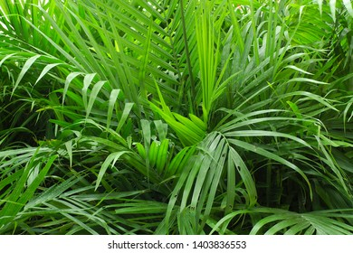 green interior plants garden vegetation leafs greenhouse