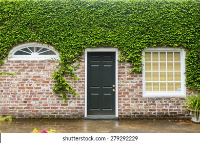 Green ivy covers historic brick home in Charleston, South Carolina