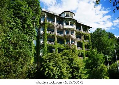 green ivy facade