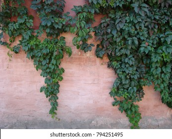 The green ivy on a stone wall at the corner of a house, a beautiful background