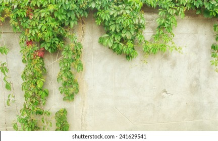 green ivy on wall